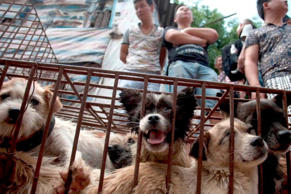 Собаки продаются на мясо в  открытую, никто не стесняется и не боится