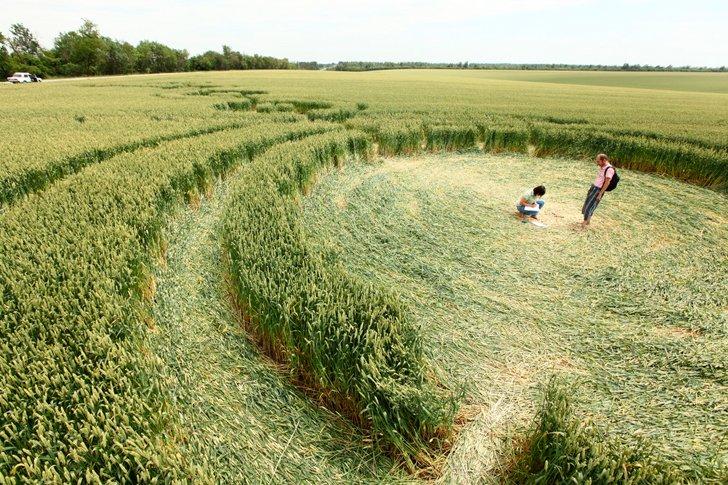 Мистические круги на пшеничных полях изучают исследователи