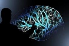 Ученые «научились» читать мысли