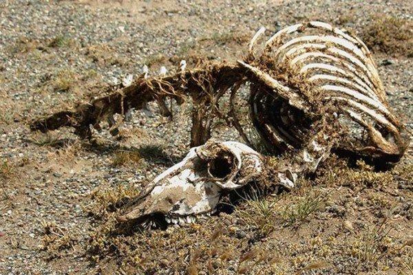 В КНР найден скелет «дракона» длиной 18 метров