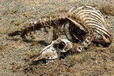 скелет.