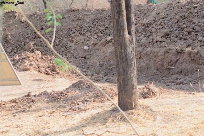 Замаскированный леопард