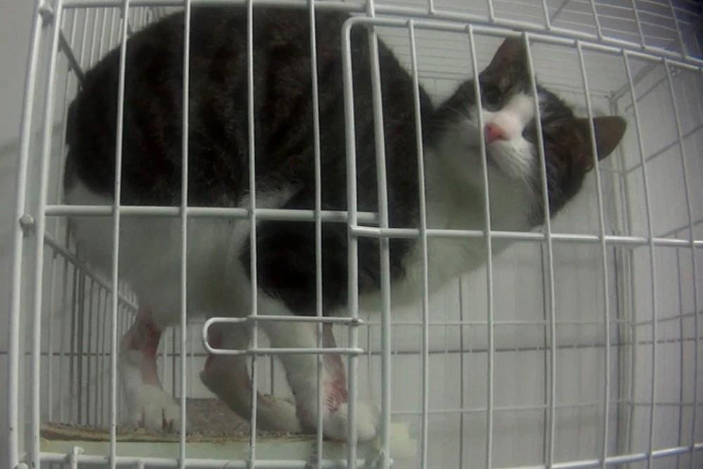 Кошки умирающие от проводимых экспериментов в немецкой лаборатории