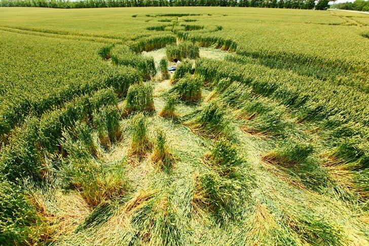 Круговые узоры на пшеничном поле