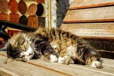 Спящий кот.