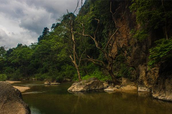Высохшие деревья у реки. Окрестности деревни Фоннья. Вьетнам.