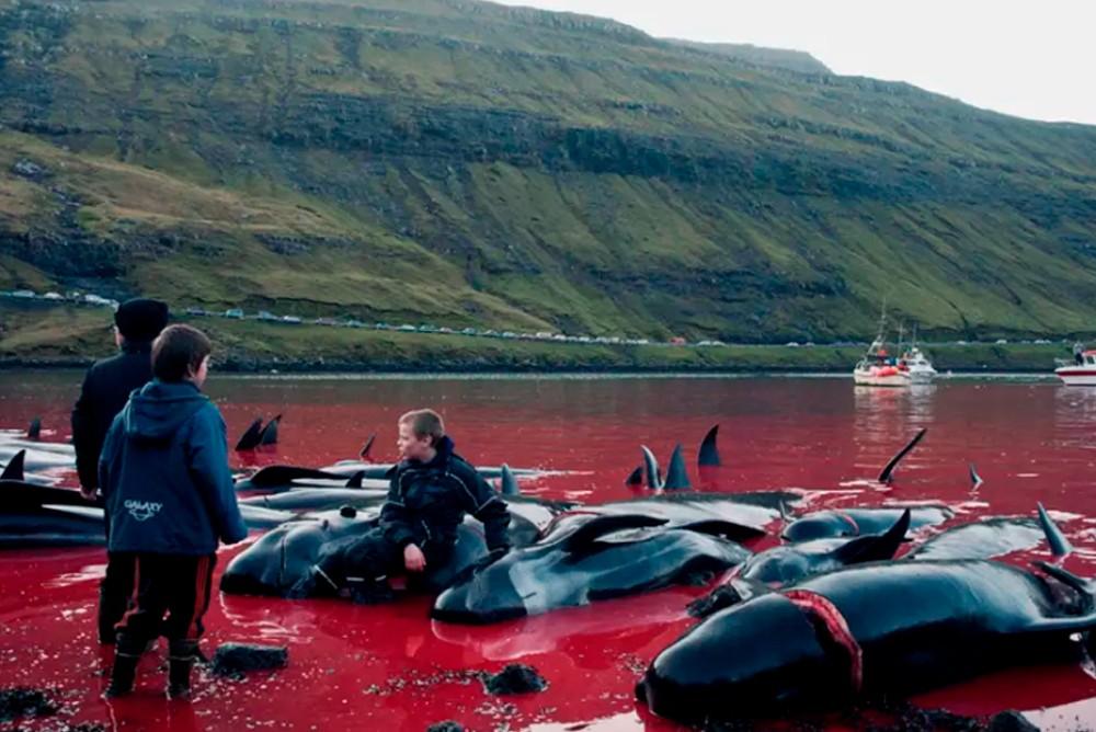 Местные дети играют среди трупов дельфинов