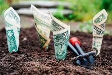 Посаженные доллары в землю