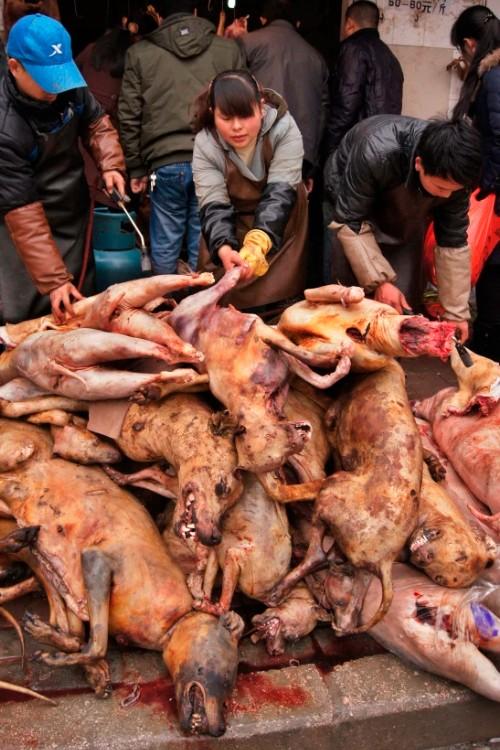 Собачьи туши свалены в кучу на праздник зимнего солнцестояния в Гуйчжоу.