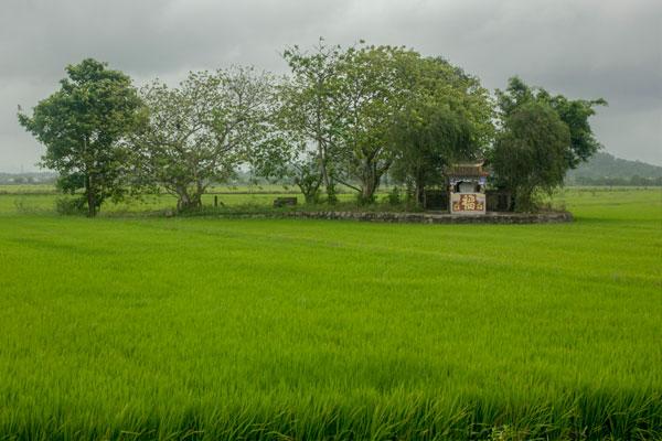 Рисовое поле в окрестностях Хюэ. Вьетнам.