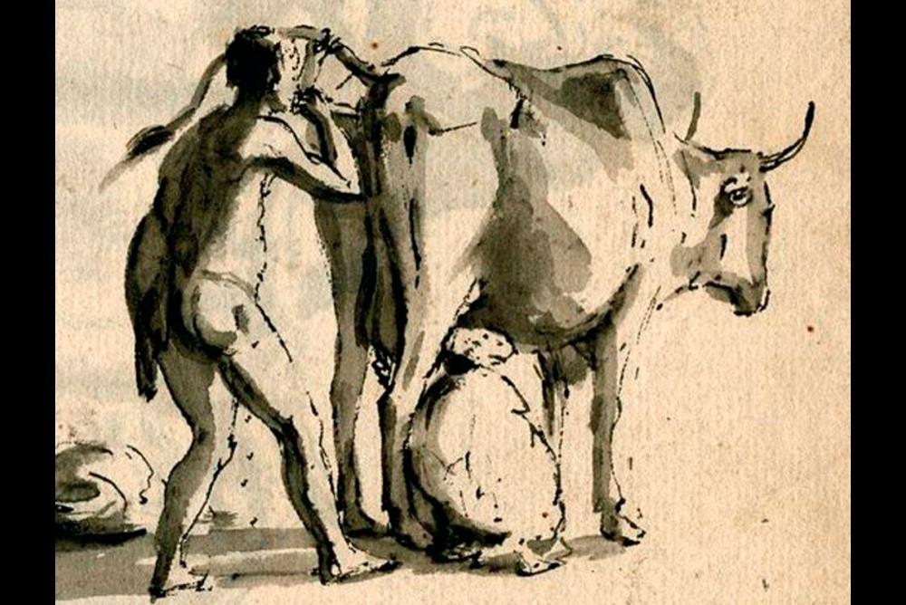 Для повышения удоев молока, скифы применяли вдувание воздуха корове или лошади во влагалище или в анус.