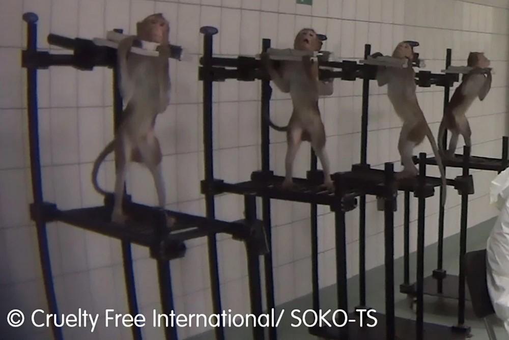 Эксперименты проводимые над макаками в Германии