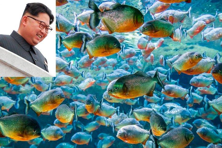 Ким Чен Ын и пираньи