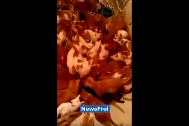 130 кошек в московской коммунальной квартире