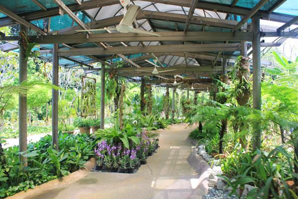 Парк орхидей в Куала-Лумпуре. Малайзия.
