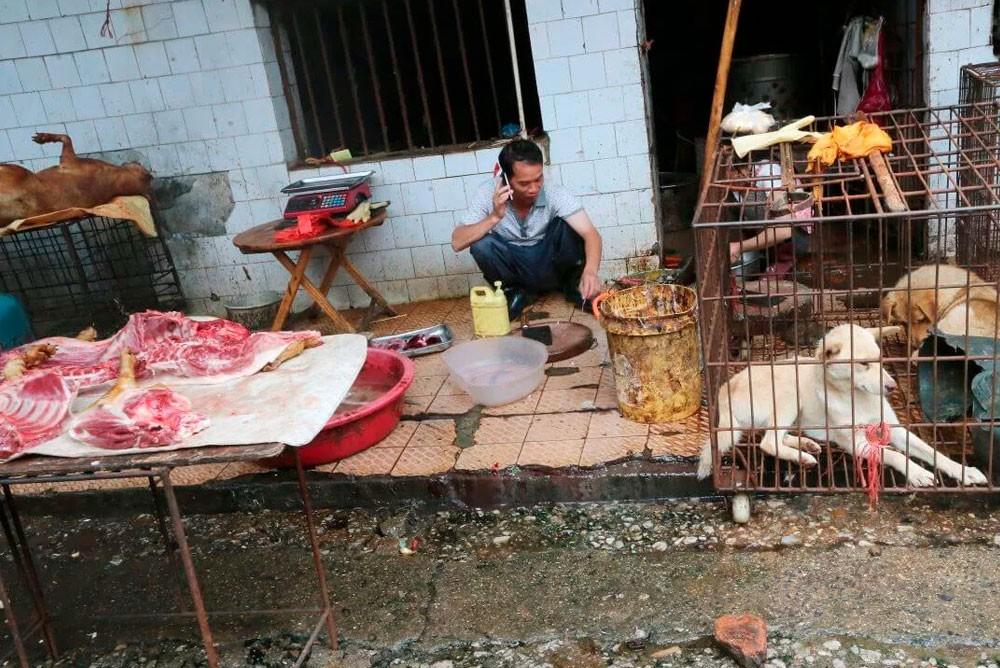 Мокрый рынок в Ухане. Здесь продают мясо собак.