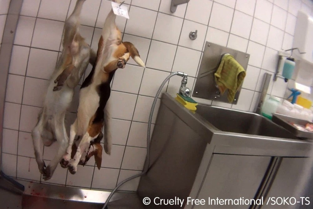 Заживо замученные животные в немецкой лаборатории
