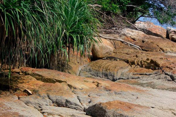 Варан на камнях в парке Taman Negara Pulau Pinang. Остров Пинанг (Пенанг), Малайзия.