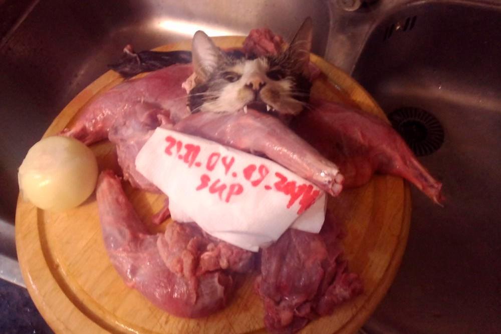 Разделанная кошка готовая к приготовлению