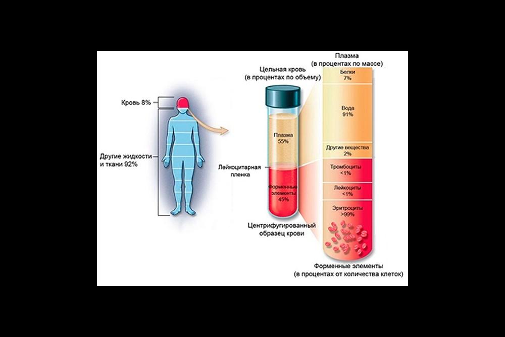 Кровь и её компоненты