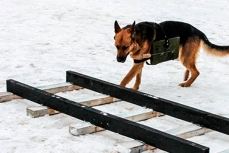 Подготовка собак к армейским международным играм.