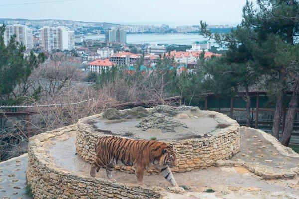 Один из самых шикарных видов на Геленджик - у тигров