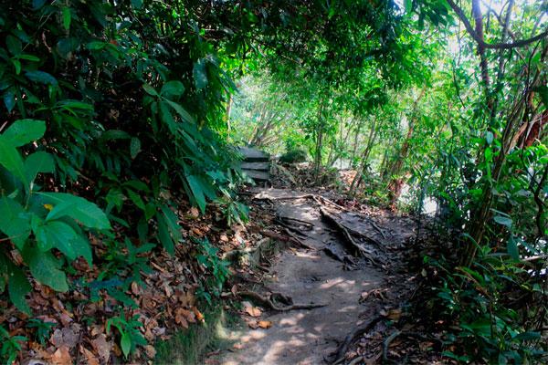 Пешеходный маршрут в парке Taman Negara Pulau Pinang. Остров Пинанг (Пенанг), Малайзия.