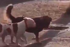 Пёс - спасатель