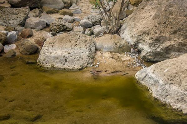 Колония бабочек на берегу реки. Фоннья. Вьетнам.