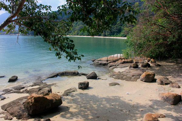 Природа в парке Taman Negara Pulau Pinang. Остров Пинанг (Пенанг), Малайзия.