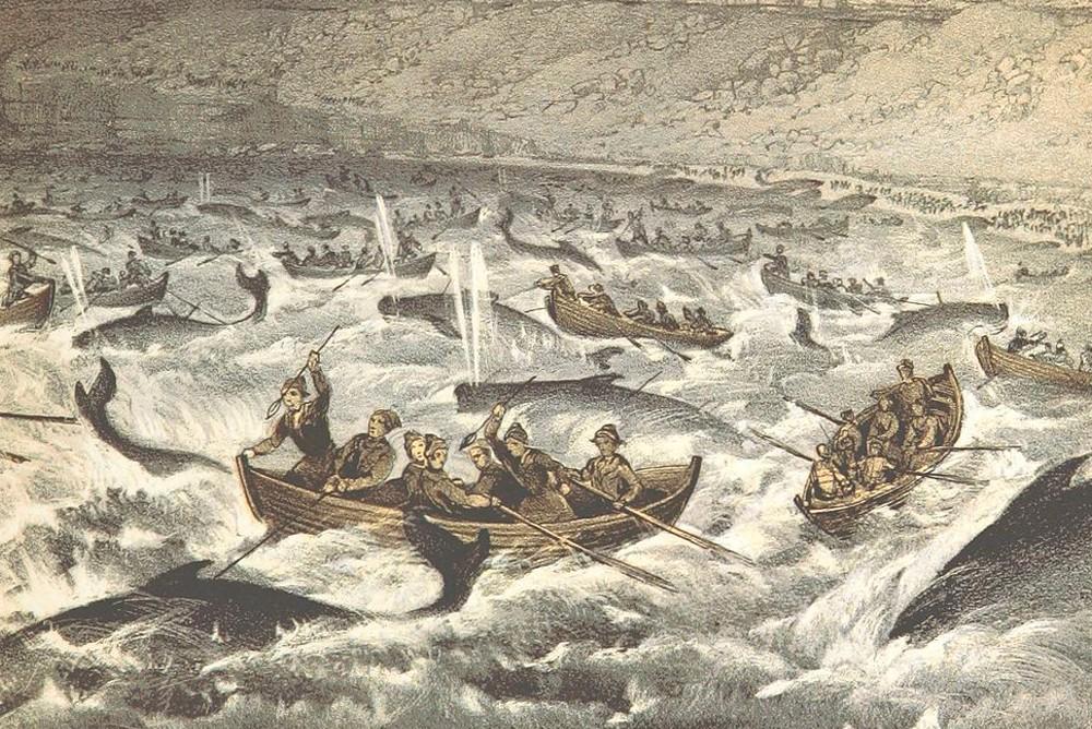 Китобойный промысел на Фарерских островах, 1855 год