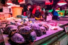 На мокрых рынках Китая возобновили торговлю дикими животными