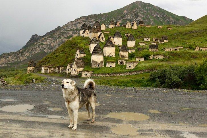 Пёс на фоне «Города мёртвых»