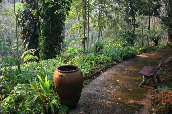 Папоротник в Ботаническом Саду Чианг Мая.