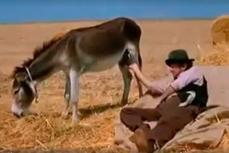Итальянский крестьянин отдыхает в поле на сене вместе со своим ослом.