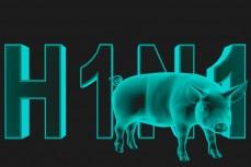 Вирус и свиньи