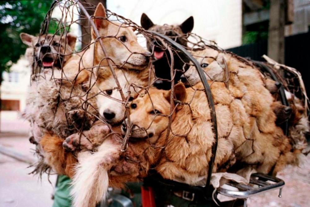 Китайцам запретили есть собак