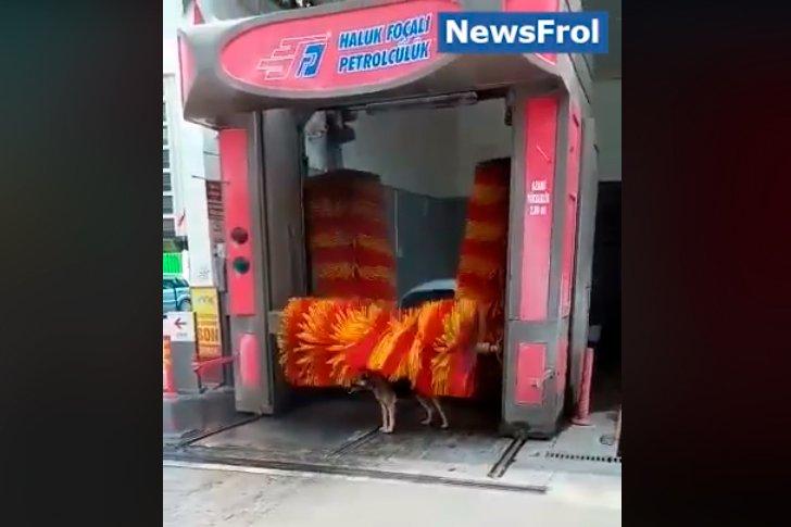 Автомойка для собаки