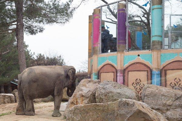 Индийский слон трётся возле кормушки в «Сафари-парке» в Геленджике