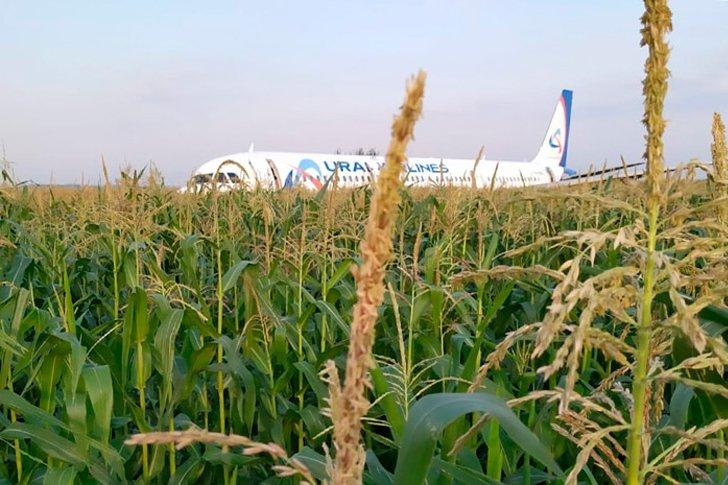 Авиалайнер в кукурузном поле