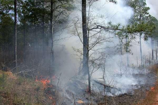 Португалия объята огнём: число погибших лесных пожаров превысило 57 человек
