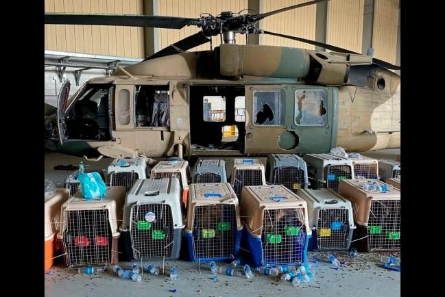 Клетки со служебными собаками брошенными американскими военными в Кабуле