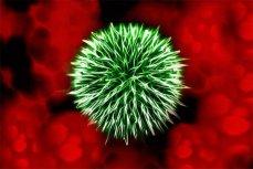 Изображение бактерии.