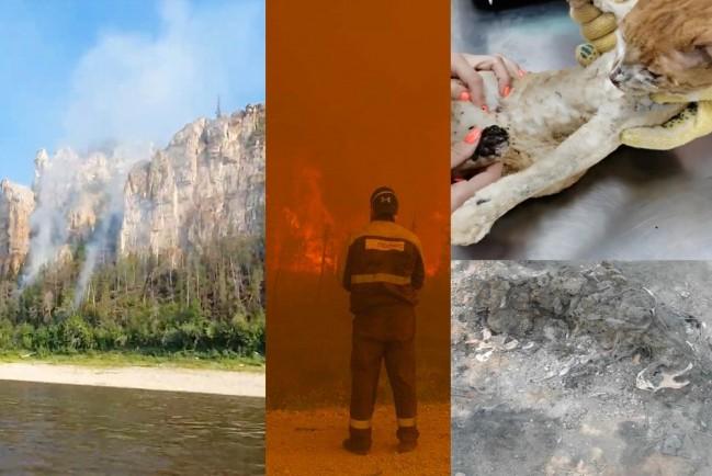 В Якутии ввели режим ЧС, горят «Ленские столбы», Монголия в дыму, сгоревшие заживо животные