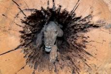 Пёс который стал мумией