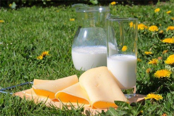 Молоко и ломтики сыра.