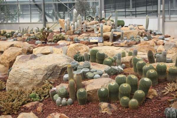 Кактусы в Ботаническом Саду Чианг Мая.
