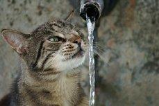 В Геленджике воду будут подавать по графику