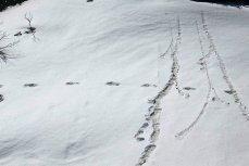 Следы снежного человека