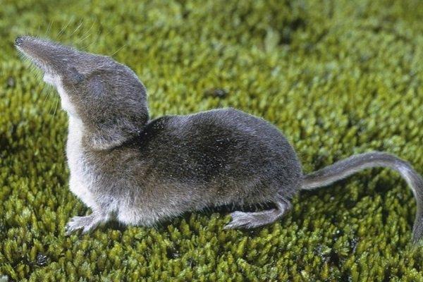 Ученые открыли животное, чья голова «усыхает» снаступлением зимы